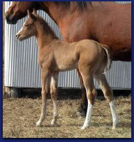 2011 BRT Filly 2 Jan.jpg