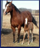 2011 BRT filly 1 Jan.jpg
